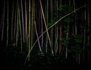 BambooNight_2005_4986_1920px