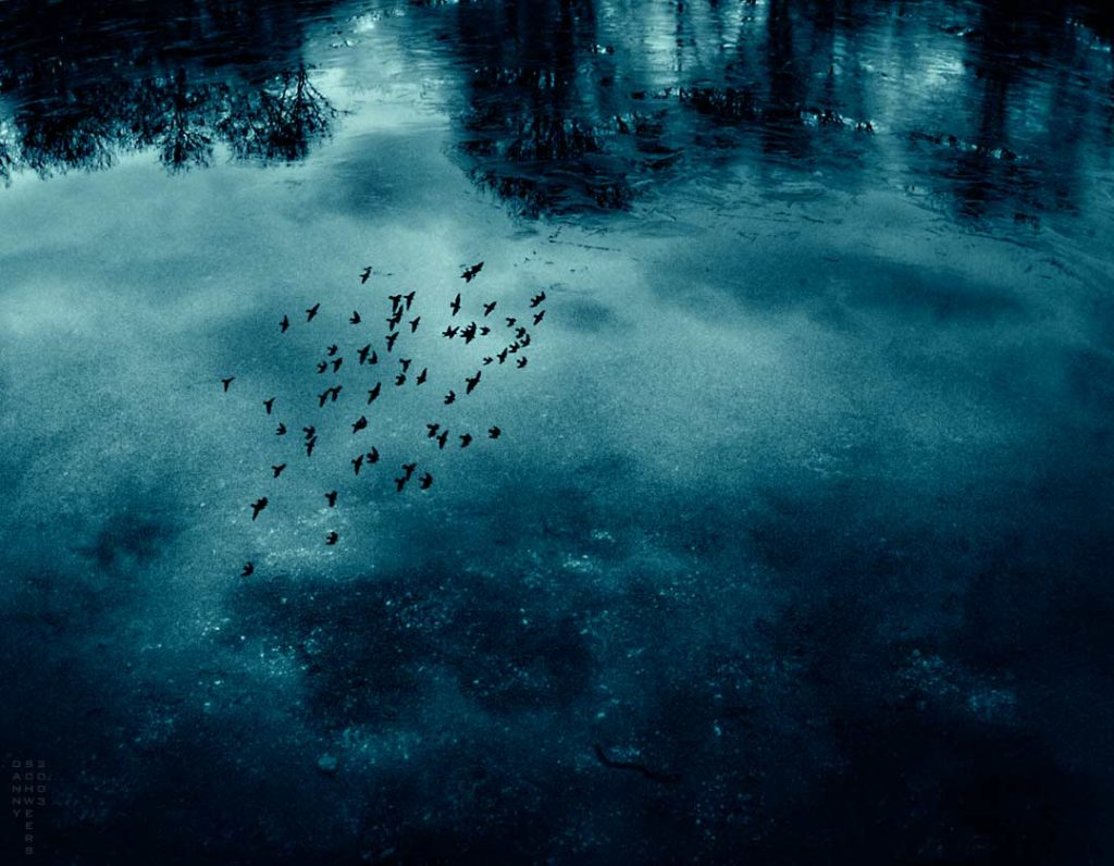 Storm clouds and birds reflected in a frozen pond by Danny N. Schweers, 2003.